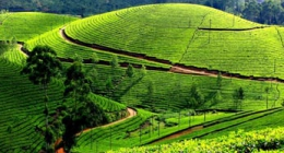 Munnar, Resort Hotels