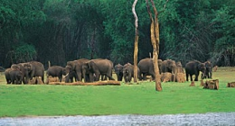 Thekkady, Resort Hotels