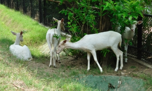 Alipur